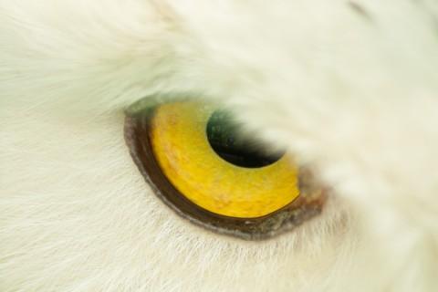 Fotokunst_Tiere-12